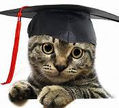 Cat in graduate's cap