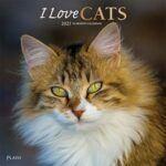 Wall calendar: orange & white longhaired cat