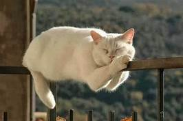 White cat snoozing on fence rail