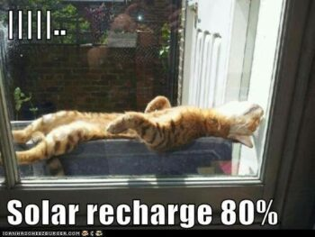 Cat stretched out in sun to nap