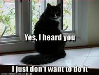 "Black cat: ""Yes, I heard you; I just don't want to do it"