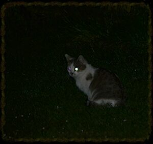 Cat at night, showing glowing eyes
