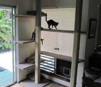 Cats climbing on high shelves