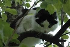 Black & white cat in tree