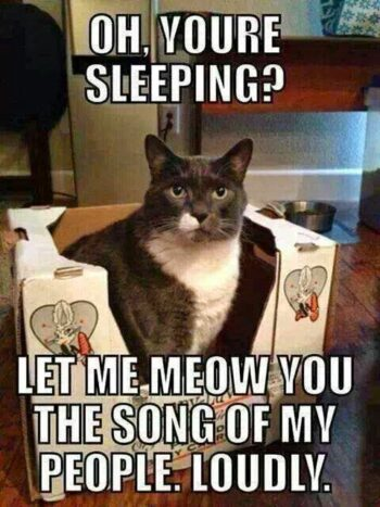 Grey & white cat offering to sing