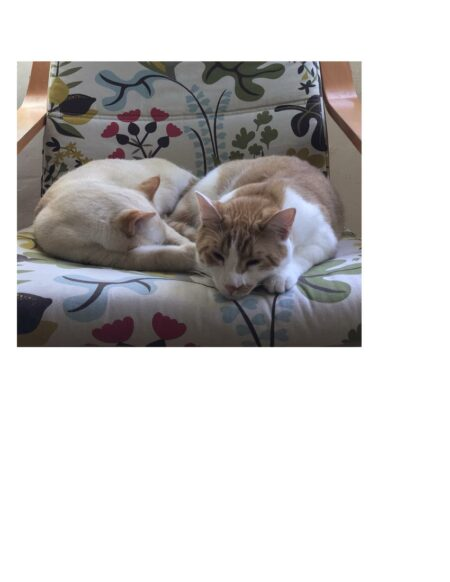 Two cats sleeping on a chair