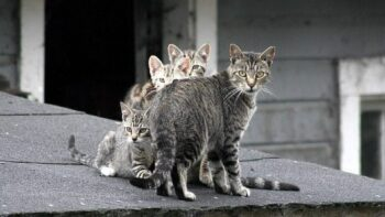 Feral cat family