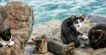 Group of feral cats on rocks near water