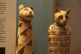 Two Egyptian cat mummies