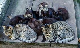 group of feral cats sleeping in a wide step