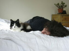 Black & white cat in bed with person