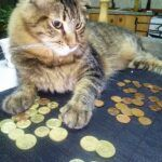 cat on bed with lots of coins