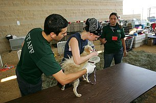 People holding dog; inserting microchip