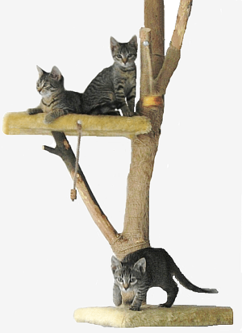 3 cats with tree scratching post