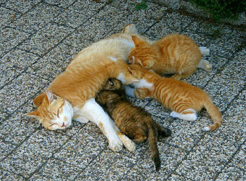 Mother cat and kittens