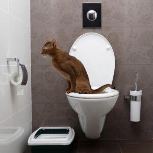Brown cat using toilet
