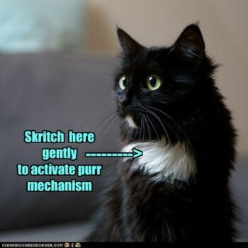 """""""Skritch here gently to activate purr mechanism"""