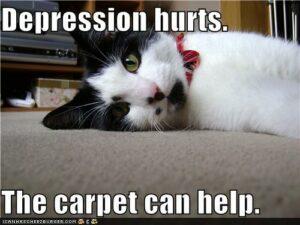 black & white cat lying on carpet