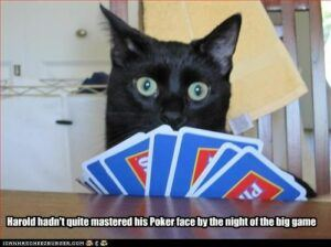 Black cat and hand of cards