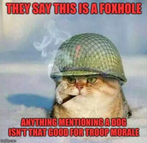 Cat in foxhole