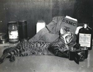 Cat sprawling;yawning against Marine's supplies