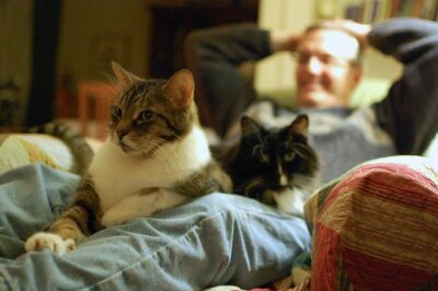 man reclining in chair with two cats on his lap