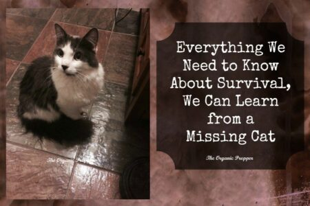"B & W cat; sign saying ""Everything we need to know about survival, we can learn from a missing cat"