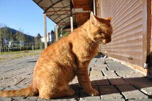 An old orange cat sitting in the sun