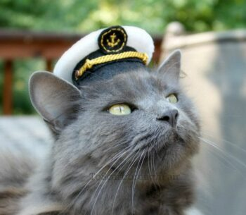 grey cat wearing marine's hat