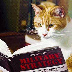 cat reading book on military strategy
