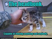 kitten giving head bump