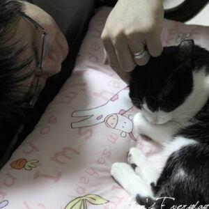 Hand rubbing b & w cat head