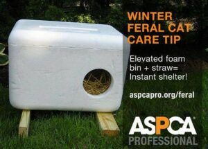 ice chest convertied into feral cat shelter