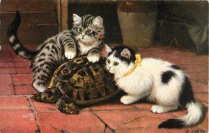 two kittens and a tortoise