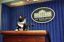 Socks, tuxedo cat, at White House podium