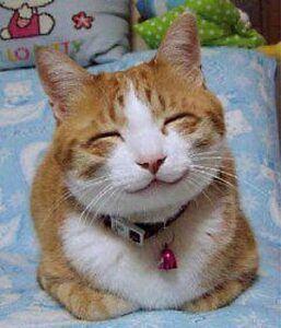 Orange & white cat smiling