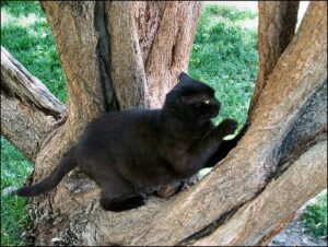 Black cat sharpening claws in tree