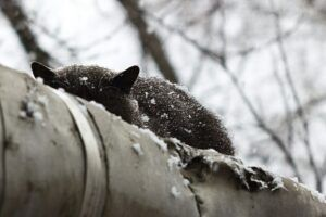black cat sleeping on central heating pipeline; snowing