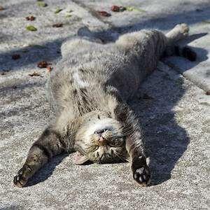Tabby cat lying on back in sun
