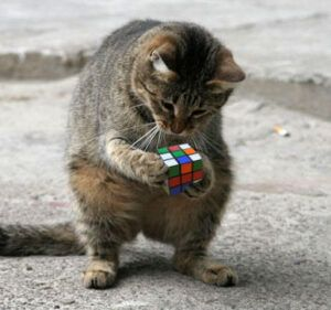 Cat on back legs, holding rubik's cube in front paws