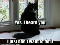 Black cat sitting in window