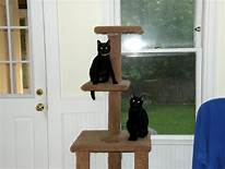 two black cats on cat tree