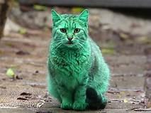 A green cat