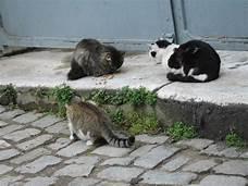 3 feral cats on sidewalk