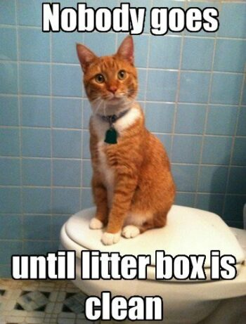 """Cat sitting on closed toilet seat. """"Nobody goes until litter box is clean."""""""