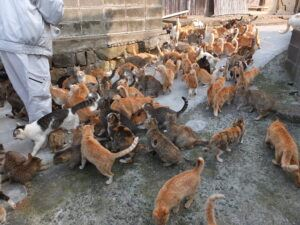 Many cats waiting to be fed