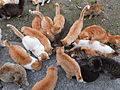 Many cats, feeding
