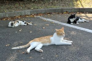 3 cats lying in the sun