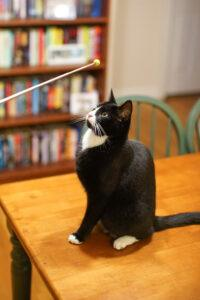 Using a target to clicker train a cat to sit