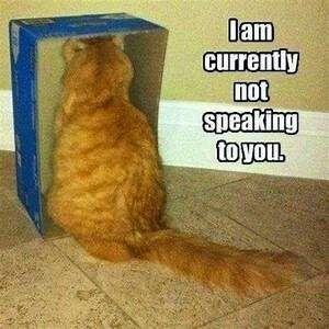 Cat in box, facing inward